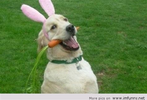 search    easter images  imfunny happy