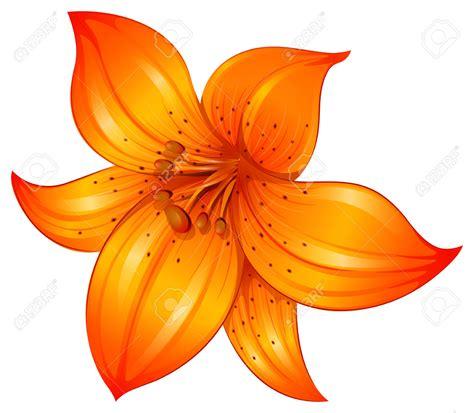 clipart fiore lilium clipart clipground