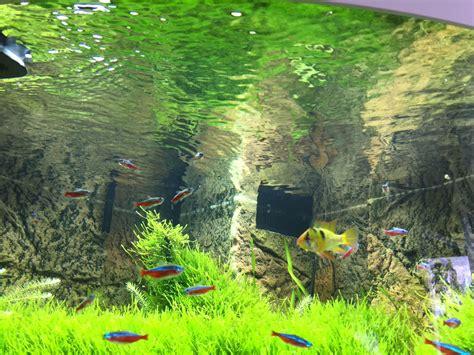 Aquarium Aquascape Skimmer Eheim Skim 350 Murah skimmer ofa ohne au 223 enfilter der eheim skim 350