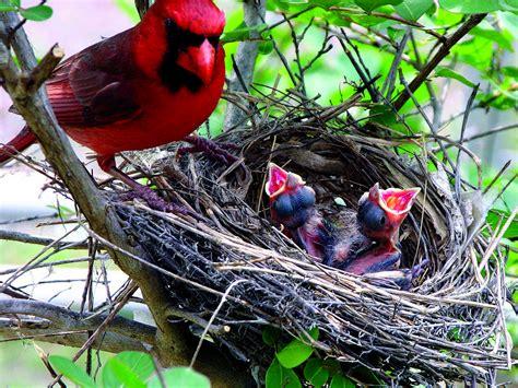 bird friendly landscapes