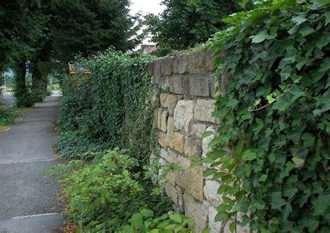 natursteinmauer begr 252 nte maue optimaler sichtschutz l 228 rmschutz