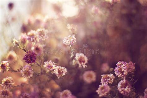 imagenes de flores asombrosas flores asombrosas del prado foto de archivo imagen de