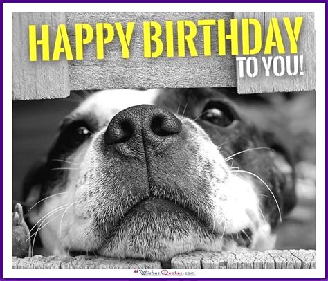 Happy Birthday Meme Dog - happy birthday memes with funny cats dogs and cute animals