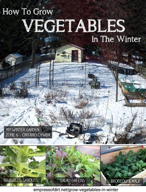 Vegetable Garden In Winter How To Grow Vegetables In The Winter Empress Of Dirt