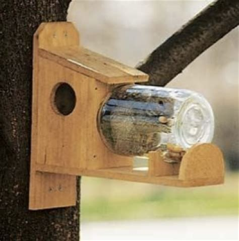 10 best diy squirrel feeders & speciality homestead