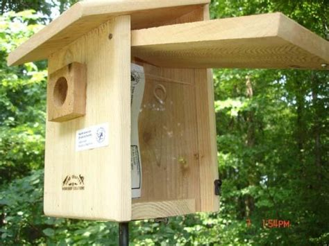 bird houses with viewing window blue bird house with viewing window 40 bird houses and bird nestin