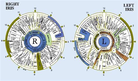 printable iridology eye chart the dynamics of the iris in iridology total detoxtotal detox