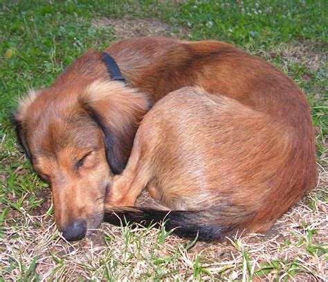 puppy sleeps a lot how many hours a day do dogs sleep the happy puppy site
