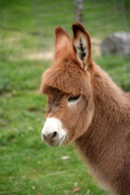 cute baby donkey xcitefunnet