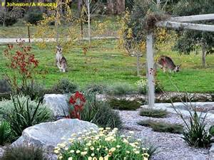 1000 images about native garden ideas on pinterest gardens kangaroo paw and overhead lighting