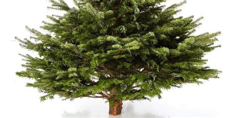 B Ume G Nstig Kaufen 581 by Weihnachtsbaum Kuenstlich Wie Echt Weihnachtsbaum