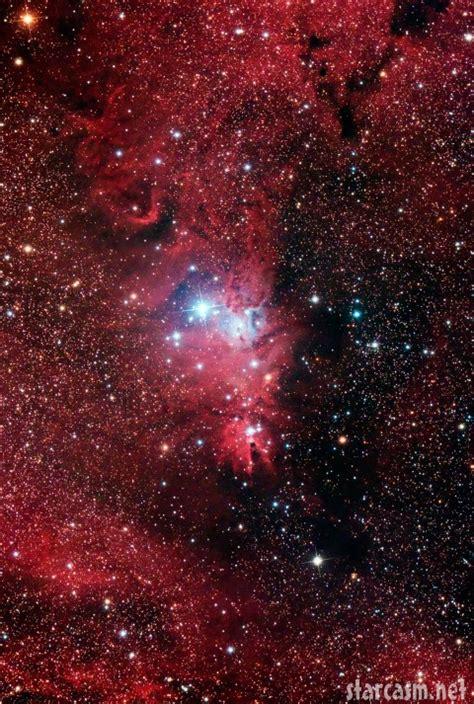 christmas tree nebula photo happy holidays from the tree nebula ngc 2264 starcasm net