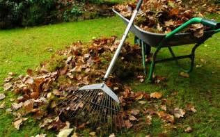 clean backyard clear up your backyard e d s hauling