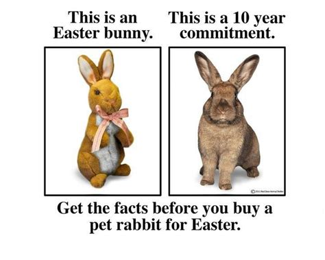 Chocolate Easter Bunny Meme - rabbit ramblings monday meme day for easter and a poem