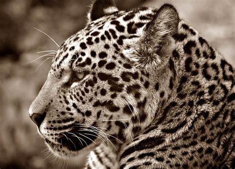 imagenes de animales y plantas de brasil flora y fauna de brasil la reserva