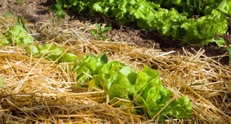 Vegetable Garden Soil Composition Of All Garden Fertilizer Organic Is Best
