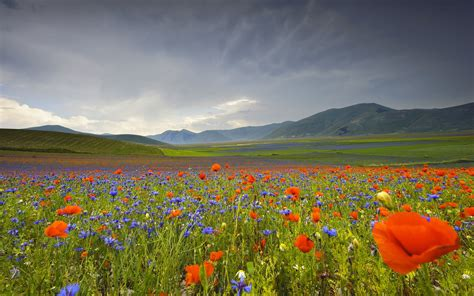 Landscape Pictures Of Flowers Italy Landscape Flowers Poppies Cornflowers Mountains