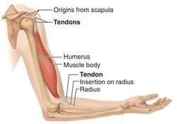 tendon strain | definition of tendon strain by medical