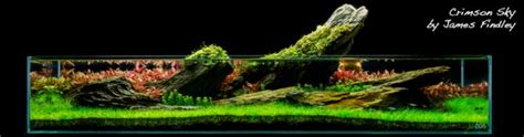 aquascaping layouts aquascaping designs ideas layouts