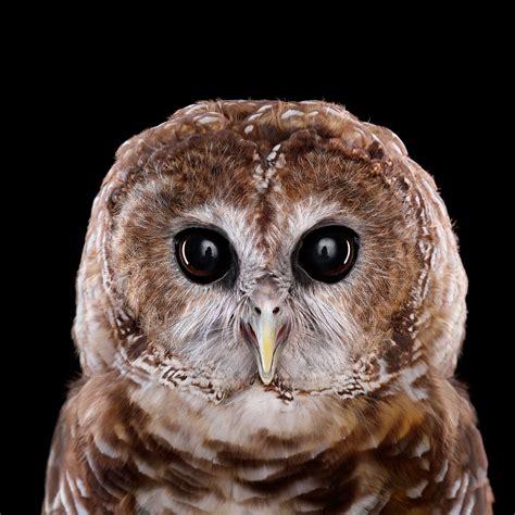 the owl who was who s who audubon
