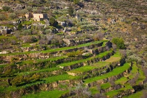 terrazzamenti in collina israele la strada vino come viaggiare informati