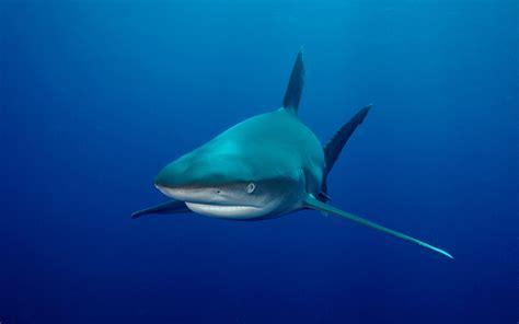Imagenes Animales Acuaticos | fotos de animales marinos