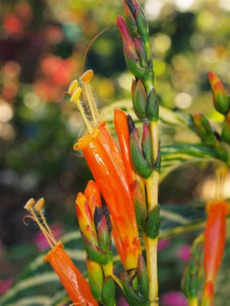 heat resistant plants oxygen generators heat resistant plants for may gbbd republished from may last year