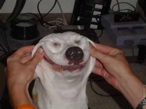 Śmieszne zdjĘcia kotÓw i psÓw ; ) (funny photos dogs and