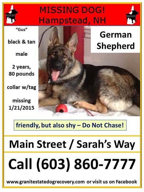 granite state recovery 82 best images about lost and found shepherds belgian malinois on lost