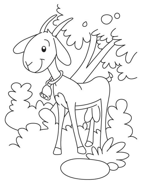 pygmy goat coloring page pygmy goat coloring pages coloring pages