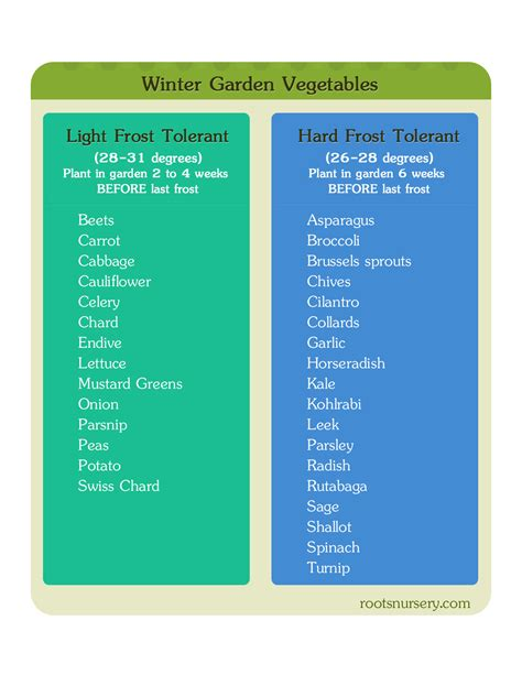 Winter Gardening Cold Weather Vegetables You Should Start Winter Vegetable Garden List