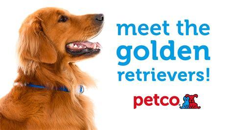 golden retriever petco golden retriever breed petco