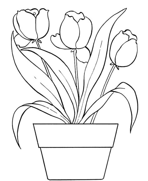 pot leaf coloring pages cliparts co