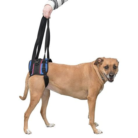 rear lift harness handicappedpets rear lift combo harness small chewy
