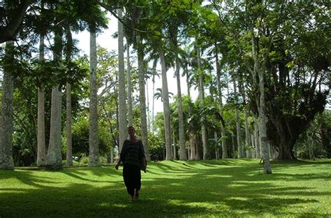 Don T Miss Places In Ghana Travelmagma Blog Shown In Aburi Botanical Garden