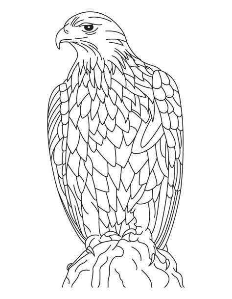 coloring page golden eagle free coloring pages of golden eagle