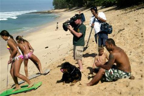 beaches for dogs on oahu, hawaii | usa today