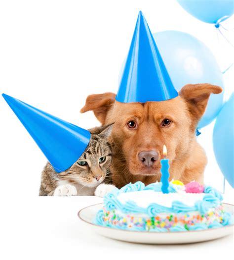 upaws dogs adoption programs peninsula animal welfare shelter