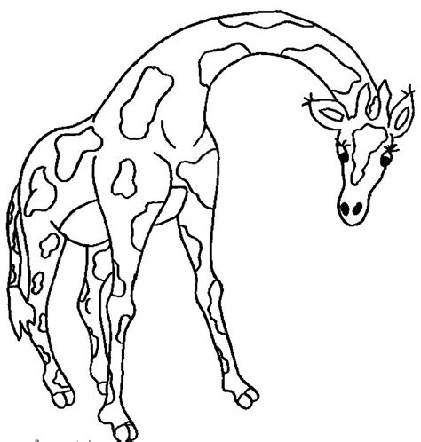 giraffe coloring pages to print free giraffe with no pattern coloring pages