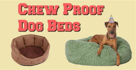 no chew dog bed the best indestructible chew proof dog beds tough doggy beds