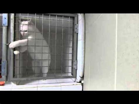 gatto in gabbia gatto in una gabbia cat in a cage