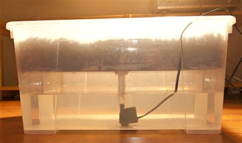 can you use a flood light to grow plants fatalii s growing guide how to build ebb flood