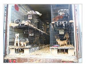 usda puppy mills puppy mills cook county pet store amendment on hold