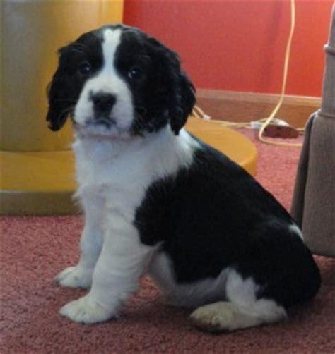 free puppies az dogs az free classified ads