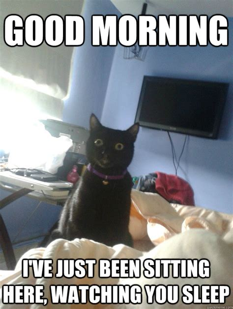 Cat Sitting Meme - good morning i ve just been sitting here watching you