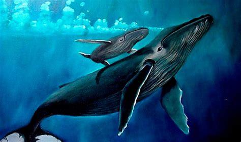imagenes reales de ballenas im 225 genes de una familia de ballenas im 225 genes y fotos
