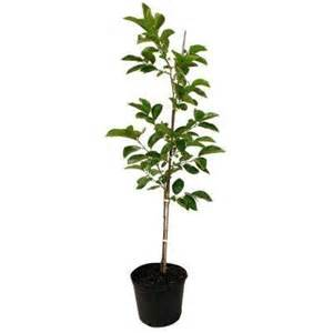 fruit trees home depot fruit trees plants edible garden the home depot