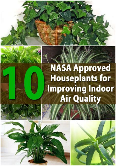 best houseplants for clean air top 10 nasa approved houseplants for improving indoor air