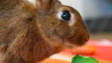 vegetables bunnies can eat can rabbits eat cucumber reference