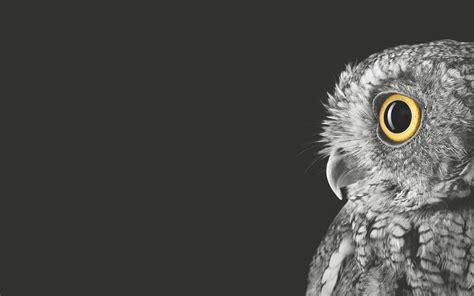 owl wallpaper for macbook surface book owl wallpaper by pfeoora on deviantart